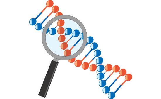 祖父や父親の遺伝はAGA男性型脱毛症や薄毛の進行に影響するのか?